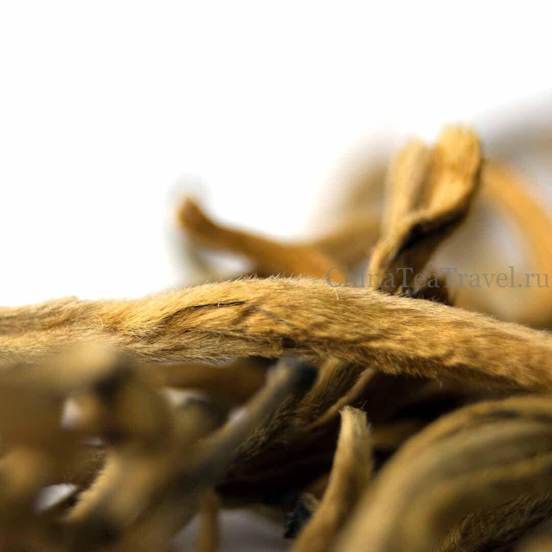 4 Красный чай из Фенцина «Большая золотая почка» Feng Qing Da Jin Ya Dian Hong '19 Spr. Tea bushes 100 y.o.
