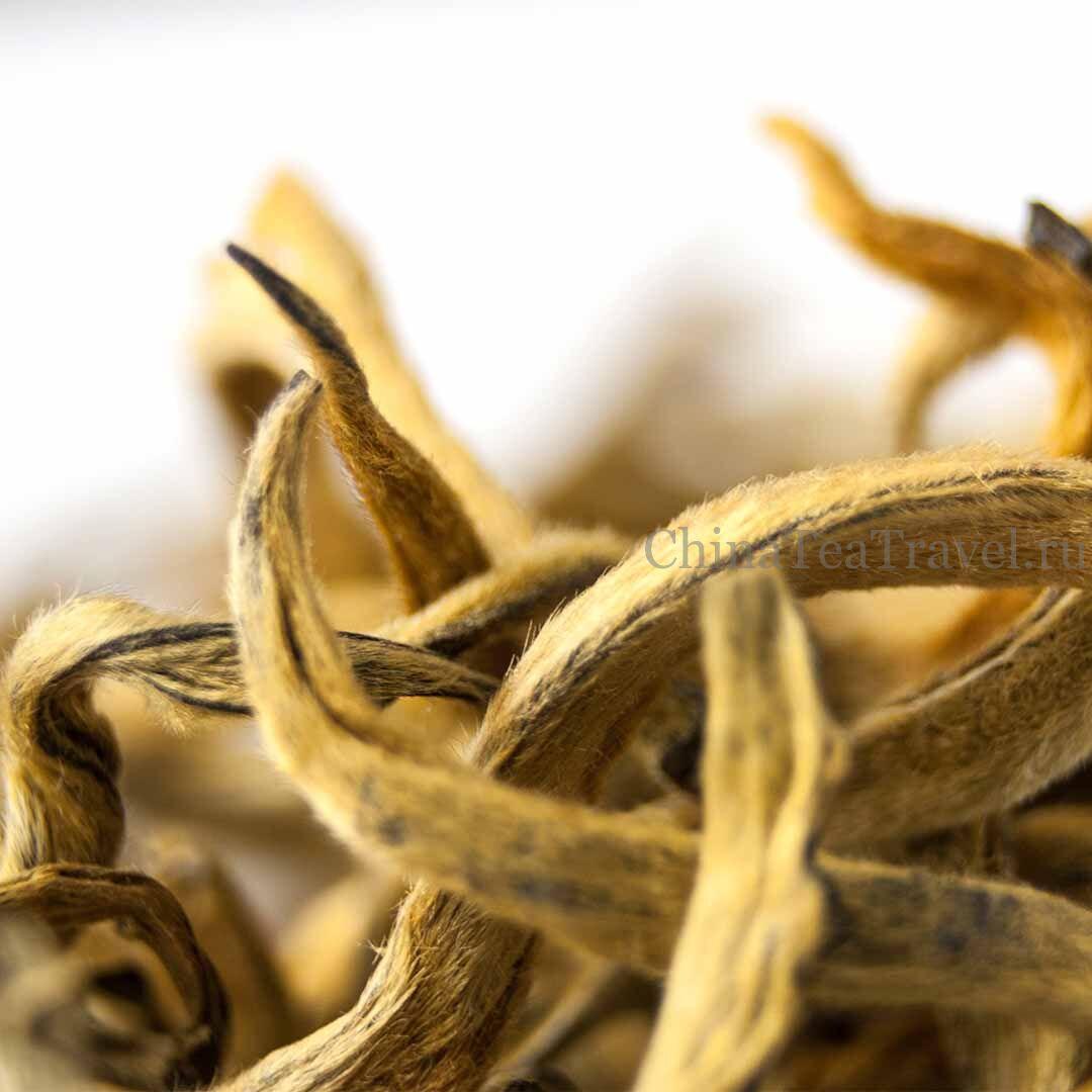 3 Красный чай из Фенцина «Большая золотая почка» Feng Qing Da Jin Ya Dian Hong '19 Spr. Tea bushes 100 y.o.
