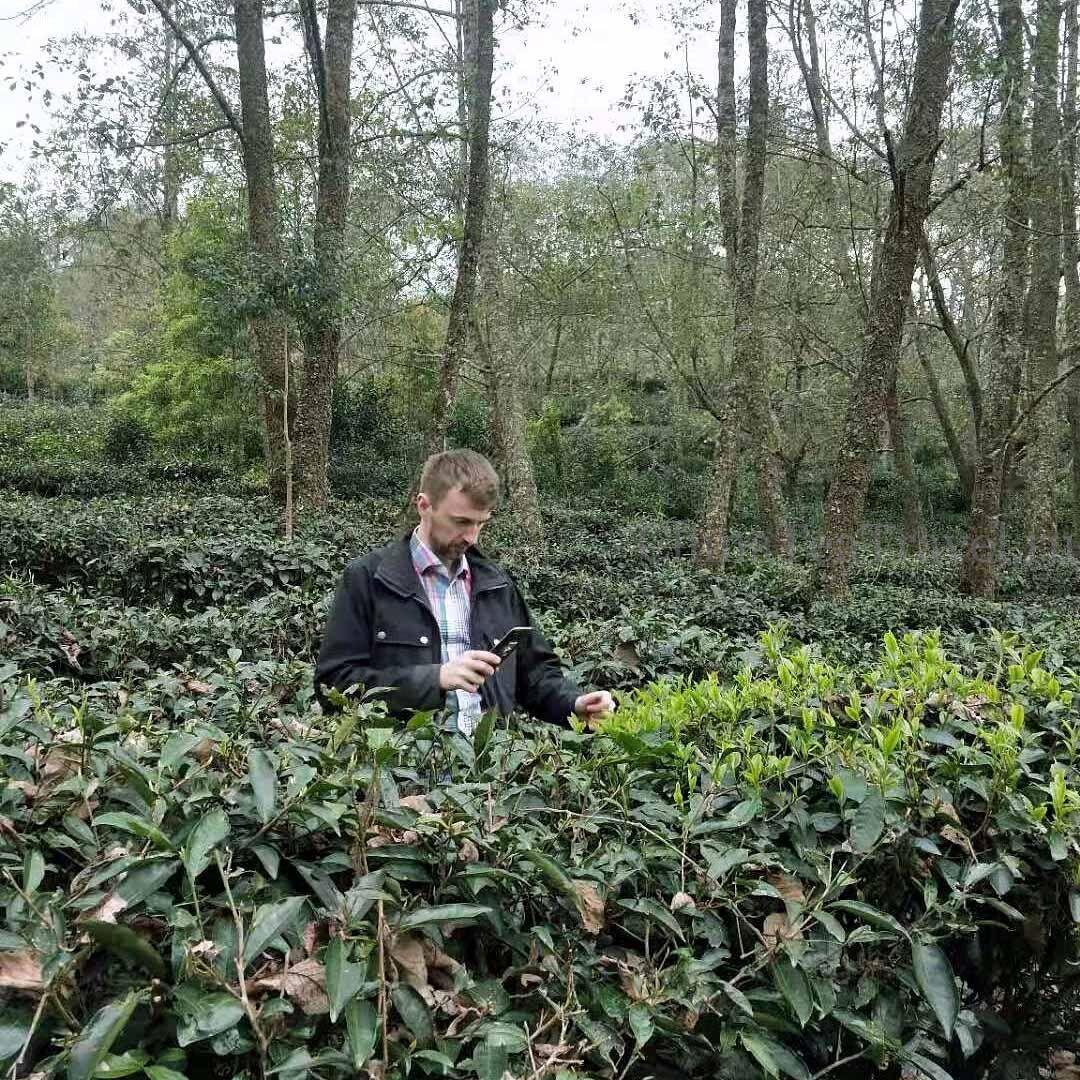 Антон замаскировался под чайный куст