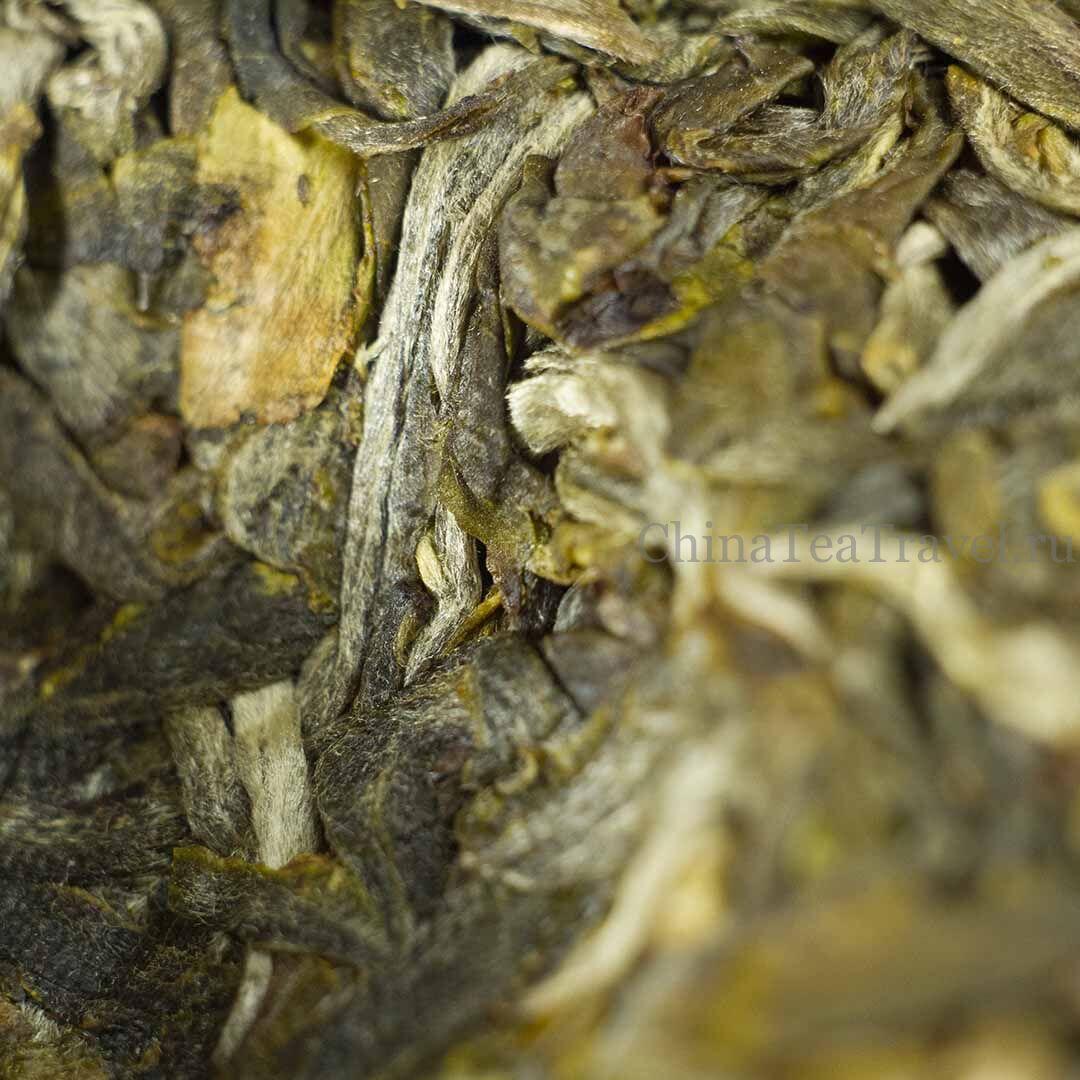 4 Шен пуэр из сада Маденг. «Чайный сад племянницы». Da Shu Sheng Tai Sheng Puerh '19 Spr. Tea bushes 80-100 y.o.