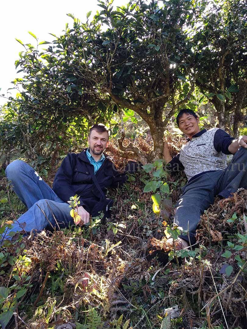 6 Красный дикий горький чай «Егерьмейстеръ» в россыпь. Ye Sheng Da Shu Sai Hong Ku Cha '19 Spr. Wild tea tree&bushes 100 y.o.