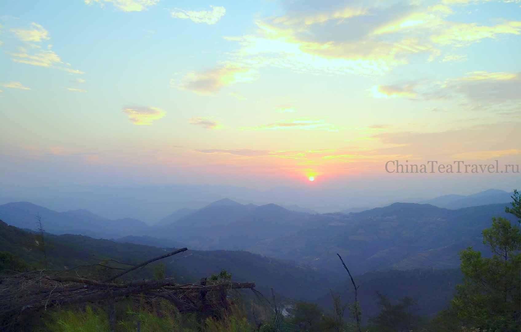 5 Красный дикий горький чай «Огненный егерь». Ye Sheng Da Shu Ku Hong Cha '19 Spr. Wild tea tree&bushes 100 y.o.