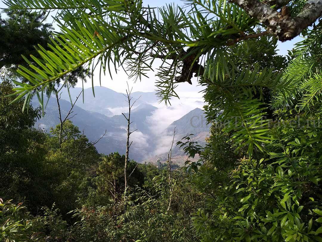 7 Красный дикий горький чай «Егерьмейстеръ» в россыпь. Ye Sheng Da Shu Sai Hong Ku Cha '19 Spr. Wild tea tree&bushes 100 y.o.