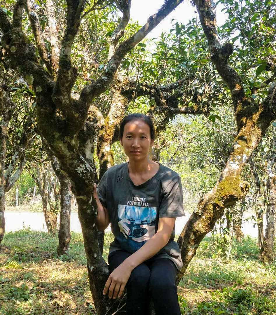 7 Шу пуэр со старых 200 летних чайных деревьев сада Ma Deng «Старый Маденг». Ma Deng Gu Shu Shu Puerh '20 Spr. Tea trees 200 y.o.